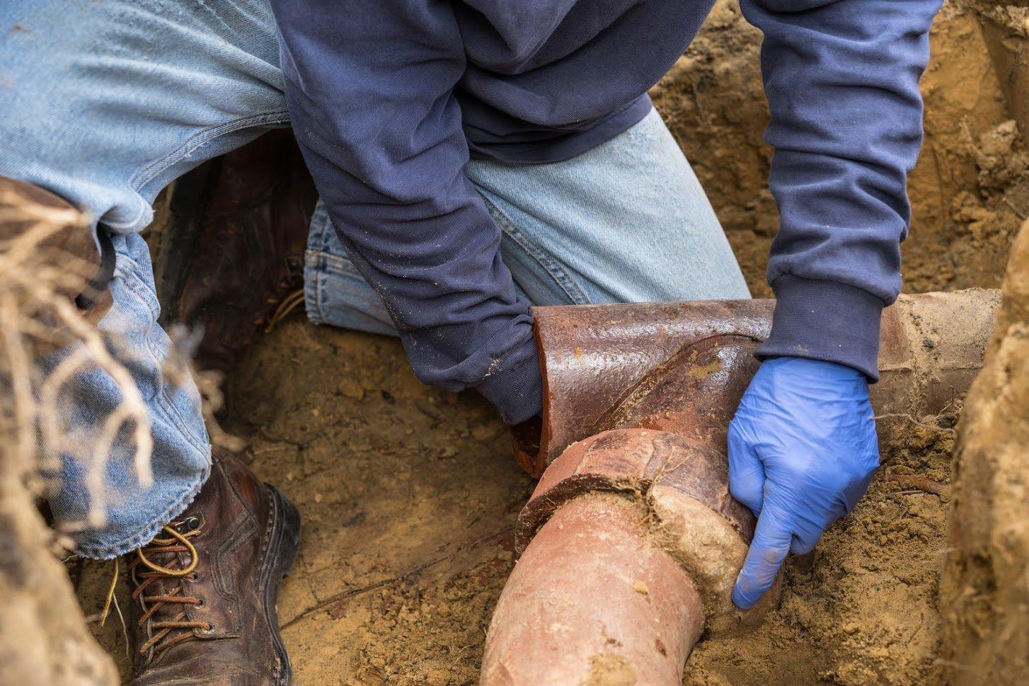 plumber turramurra tree roots in plumbing